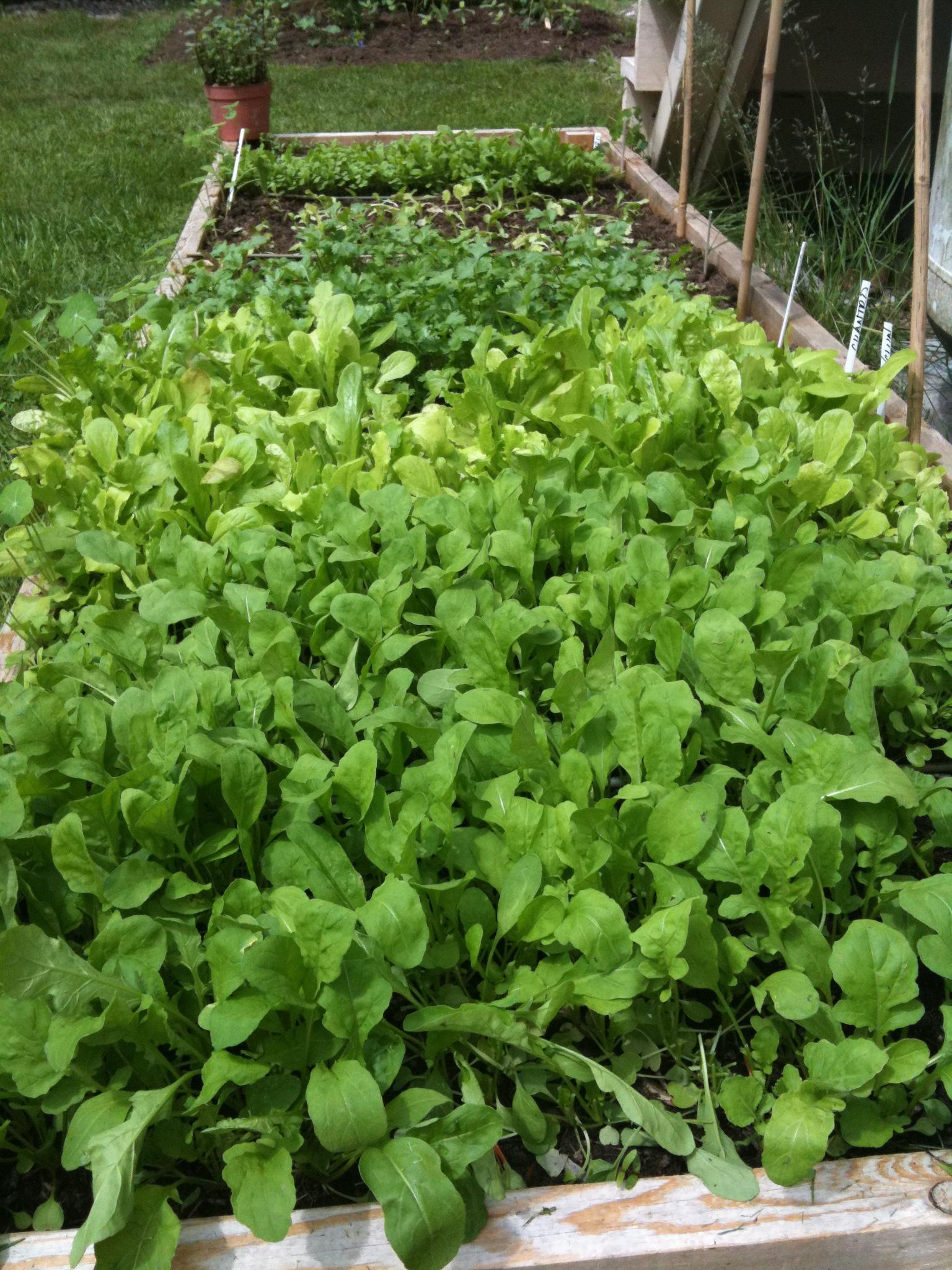 Just 3 weeks seed to harvest