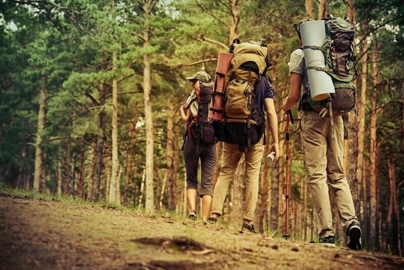 a group of people hiking in the forest